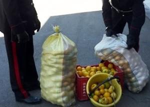carabinieri-15x10_ limoni
